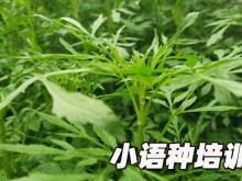 苏州平江区欧风培训中心怎么样
