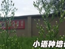杭州下城区欧风培训中心怎么样