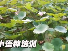 上海徐汇区欧风培训中心怎么样