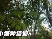 上海黄浦区欧风培训中心怎么样