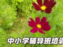 郑州中小学辅导机构排名