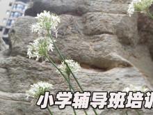 郑州小学辅导班排名