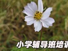 郑州小学辅导班收费标准