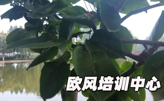 青岛市南区欧风培训中心怎么样